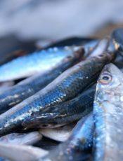 طريقة تقطيع سمك الهمسي – Hamsi