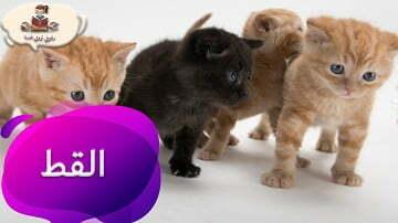 معلومات عن حيوان القط للأطفال