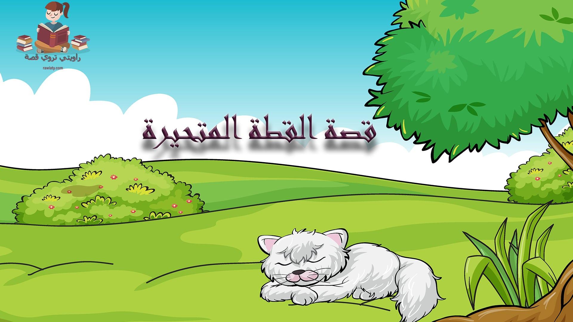 قصة القطة المتحيرة من قناة راويتي تروي قصة