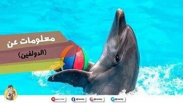 معلومات عن حيوان الدولفين (دلفين)