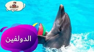معلومات عن حيوان الدلفين للاطفال