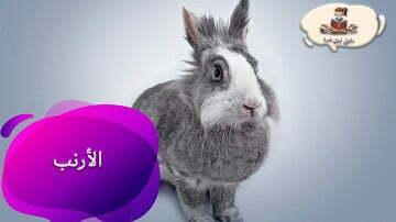 معلومات عن حيوان الأرنب للأطفال